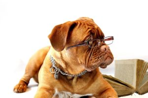 A dog using it's brain with glasses on