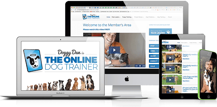 Doggy Dan's Online Dog Trainer Review by a Certified Dog ...