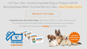 Doggy Dan online trainer picture