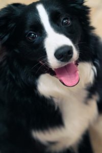 A black and white dog