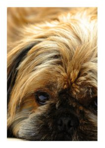 Small brown and black dog
