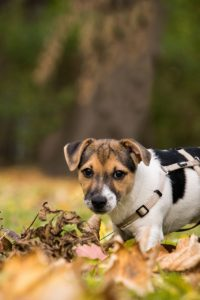 A puppy in leaves