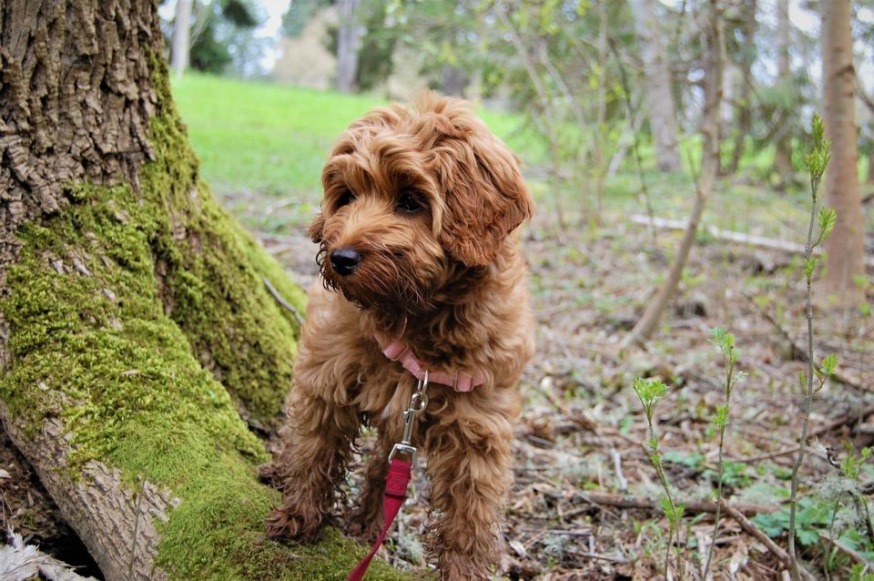 Dog by a tree