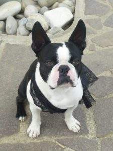Small black and white dog