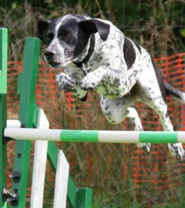 A dog jumping over a gate