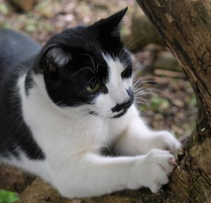 A black and white cat