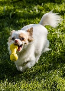 A dog with a toy